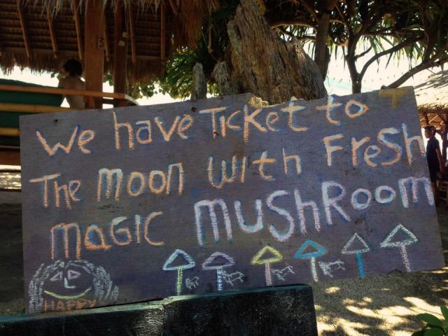 Magic mushrooms in Gili islands