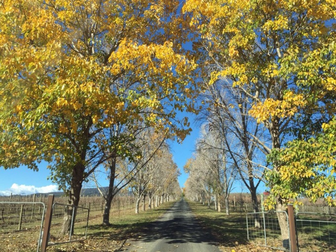 a weekend in Mudgee, NSW | Life After Elizabeth