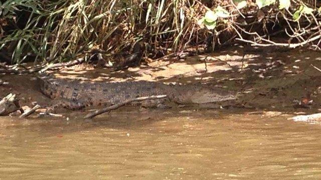 Crocodile cruise in Cairns
