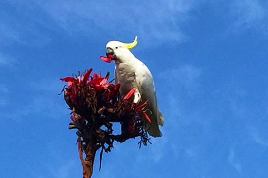 cockatoos in Australia | Life After Elizabeth